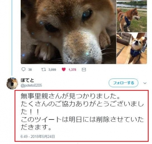 千葉県柴犬_005