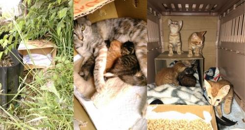 愛知県親子猫遺棄002~004