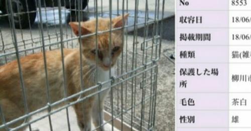 福岡県迷い猫03
