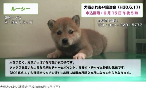 前橋市譲渡会01