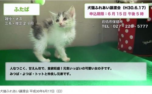 前橋市譲渡会02
