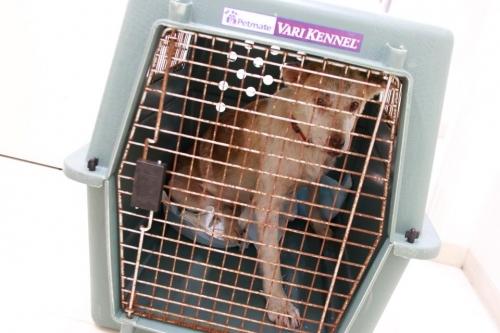 18-06-18母犬引き出し002