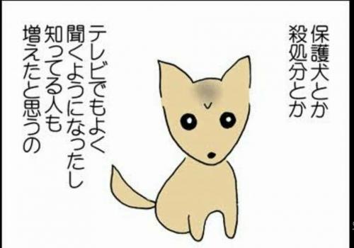 長崎県収容犬猫たちの為に001