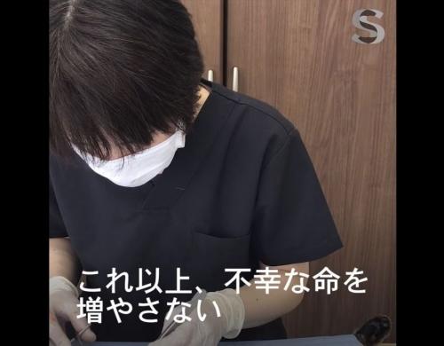 ねこけん千葉本部設立01