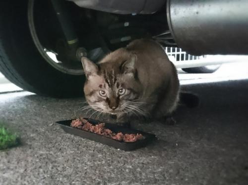 ◎地震で逃げた猫010