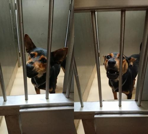 18-07-17保護犬002~003