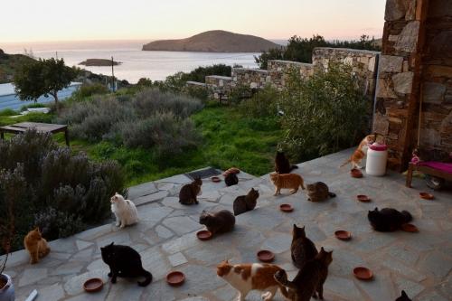 ギリシャで猫の世話013