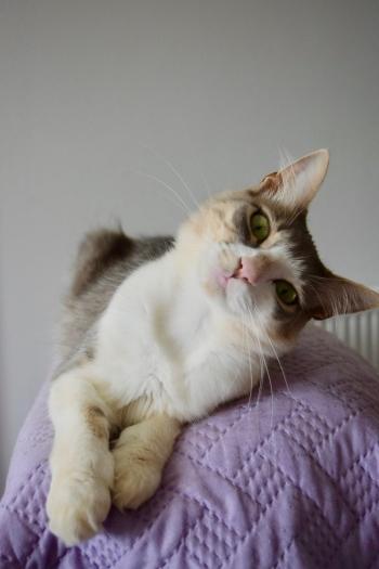 ギリシャで猫の世話011
