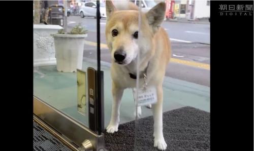 自動ドアを開ける犬ジャック002