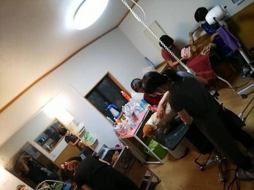 ○愛知県コーギー繁殖場崩壊007