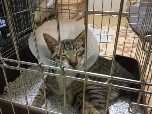 立花高校18-07月保護猫004