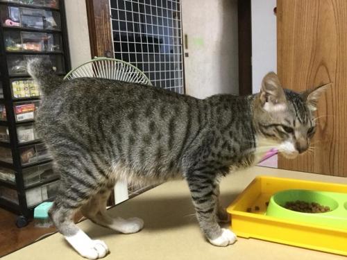 立花高校18-07月保護猫006