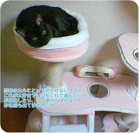⑦猫タワー