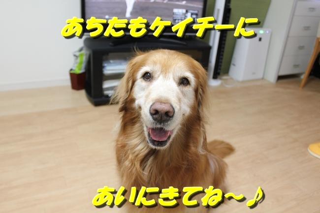 サラめし 006
