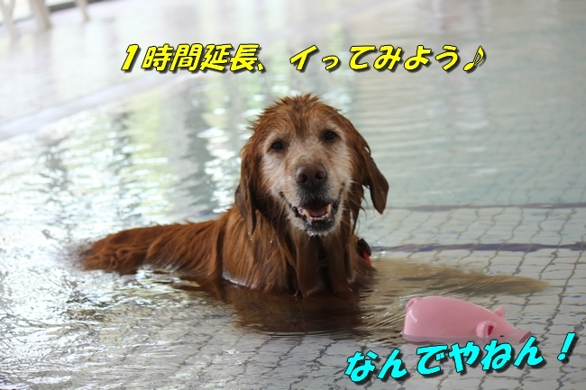 仁&ミミ41度車内写真 151