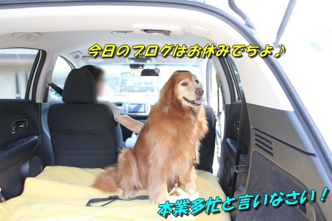 仁&ミミ41度車内写真 241