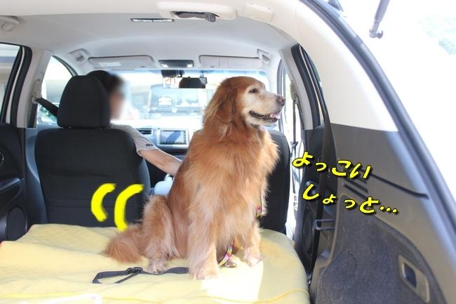 仁&ミミ41度車内写真 243