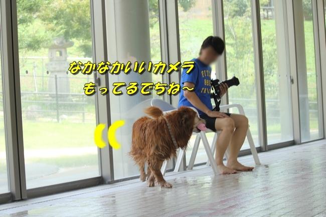 仁&ミミ41度車内写真 154
