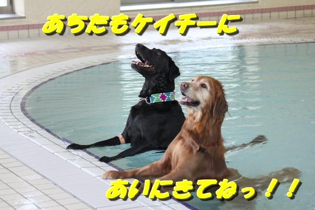 仁&ミミ41度車内写真 066