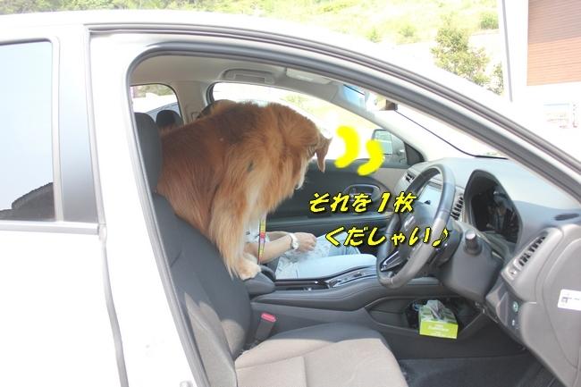 仁&ミミ41度車内写真 226