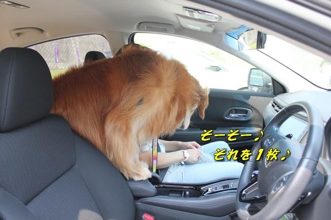 仁&ミミ41度車内写真 227