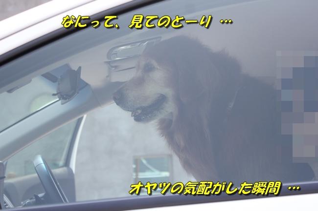 仁&ミミ41度車内写真 233