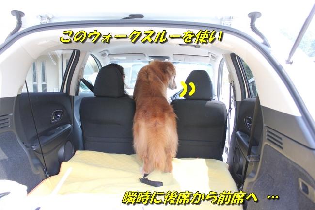 仁&ミミ41度車内写真 234