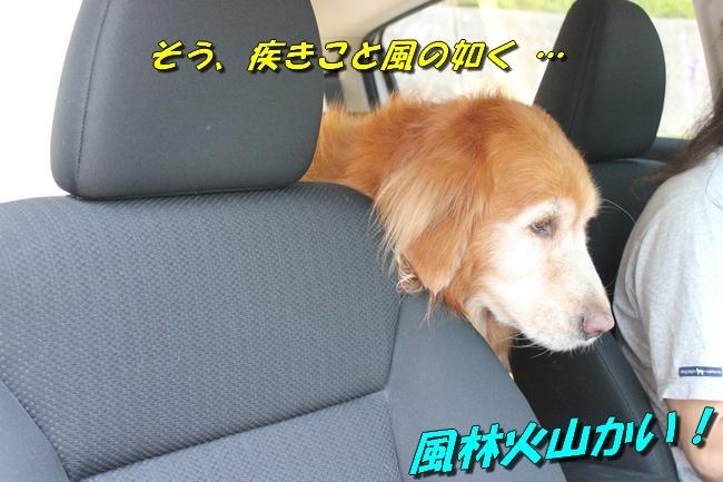 仁&ミミ41度車内写真 255