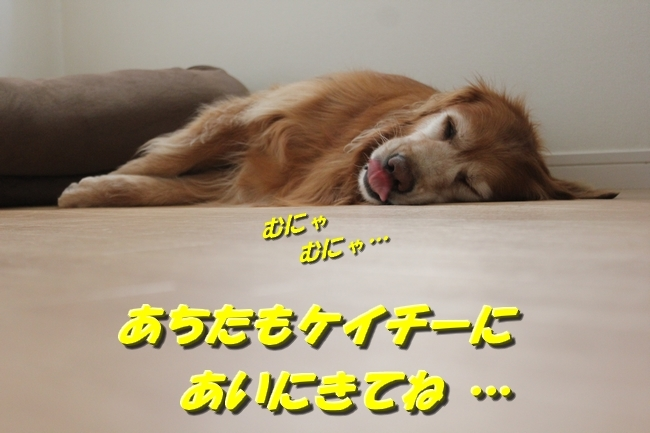寝あくび文庫本 004
