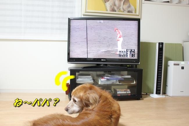TV鑑賞新聞 007