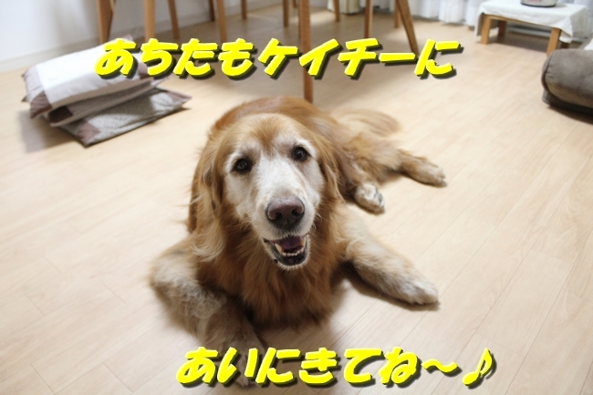TV鑑賞新聞 031