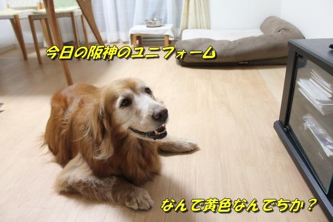 TV鑑賞新聞 033
