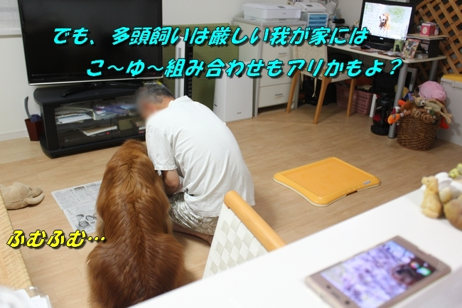 TV鑑賞新聞 065