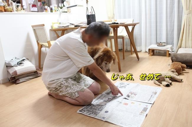 TV鑑賞新聞 074