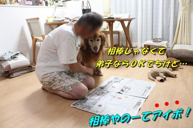 TV鑑賞新聞 071