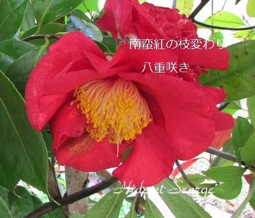 IMG_2224 - コピー-1