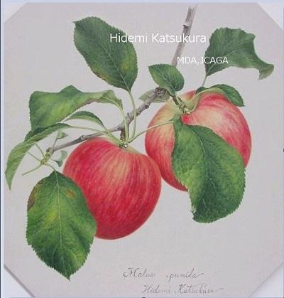 hpリンゴセミナー