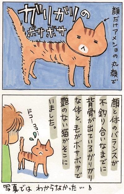 猫って生き物なんだよ3 3-3