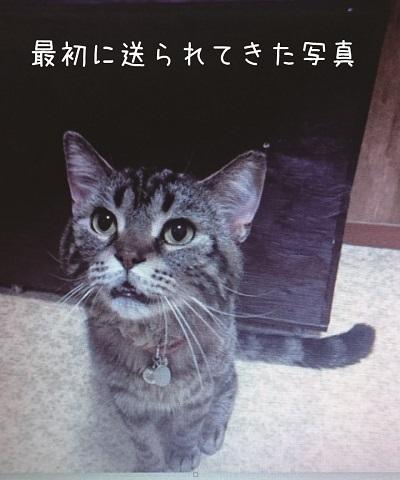 猫って生き物なんだよ3