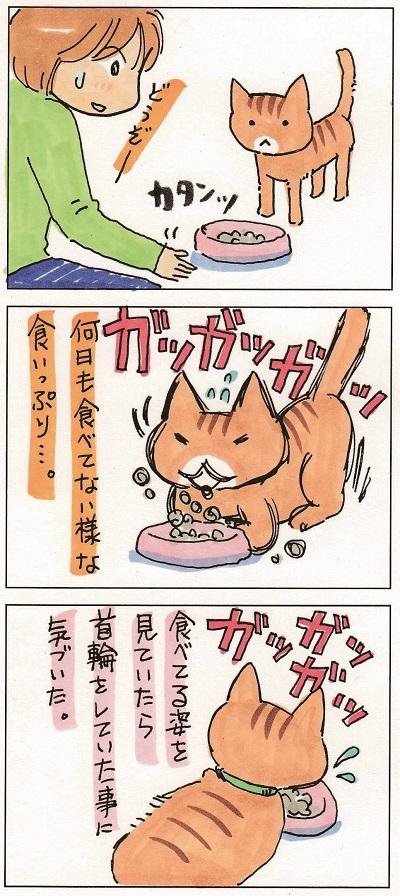 猫って生き物なんだよ4 2-3