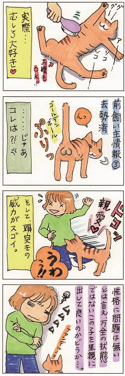 猫って生き物なんだよ6 3-4