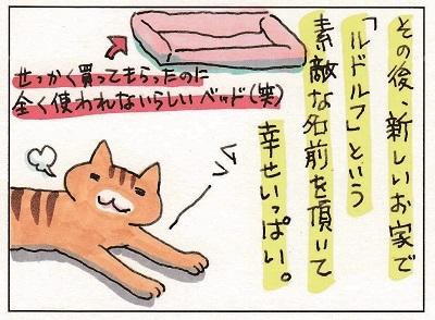 ルドルフ君の第二の猫生1 1-2