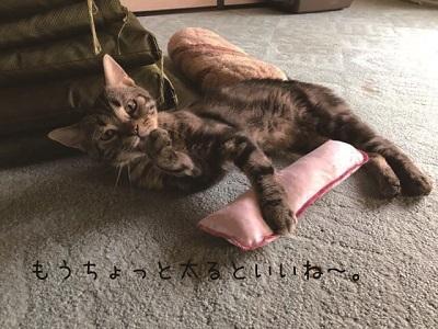 ルドルフ君の第二の猫生1