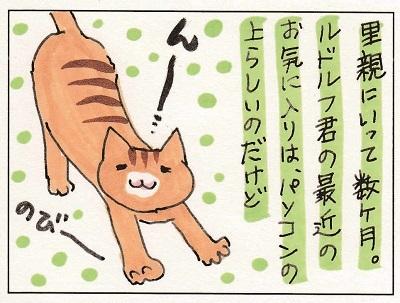 ルドルフ君の第二の猫生2 1-2