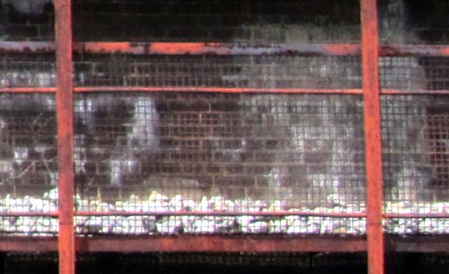 18911ht09.jpg