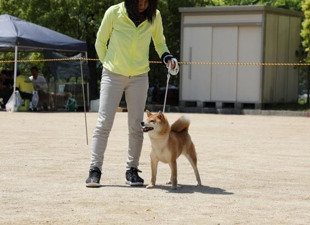 2018-04-29高知連合展成犬雌14