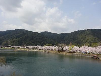 川沿いに桜並木