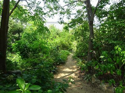 ジャングル志度寺