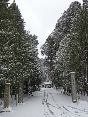 並木と白いお寺