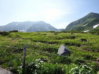 お花畑の向こうに立山
